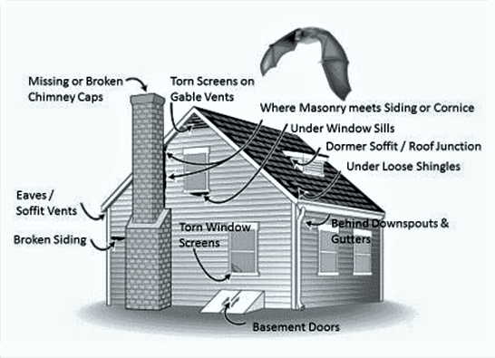 Cost Of Adding A Bat To An Existing House on