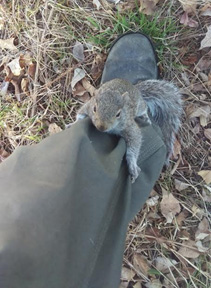 Wild Animal Removal For Squirrels