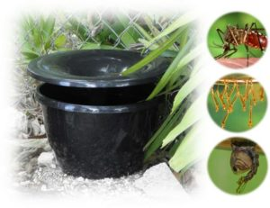In2Care Mosquito Trap Installer In Massachusetts